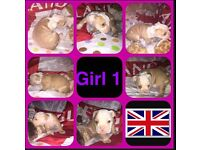 3/4 British bulldog 1/4 old tyme puppies for sale