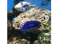 Marine fish and live rock for sale