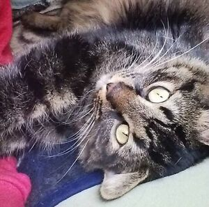 beautiful cat for rehoming