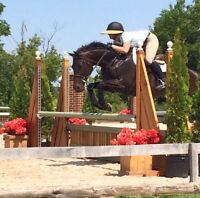 Thoroughbred Mare For Partboard