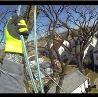 Certified Arborist - Winter pruning and Removals