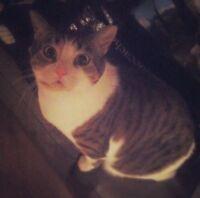Indoor Cat needing a good home
