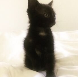 Kitten For Sale 💗