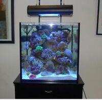 Aquarium (all in one setup for reef tank)