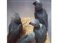 Adorable beautiful baby parrots