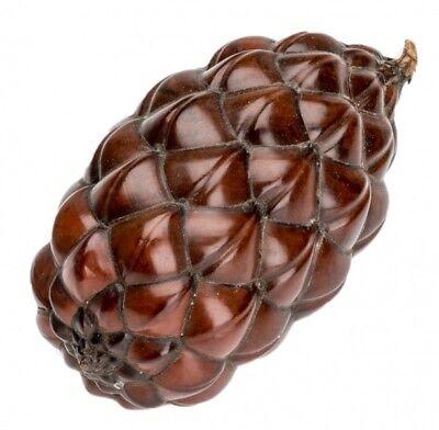 NaDeco® Thika Nuss ca. 6-12cm | Raphia farinifera | Raffia Frucht | Palmenfrucht