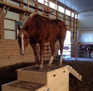 Need help breaking your first horse?