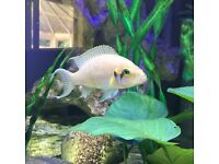 Tropical Fish (priced individually)