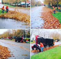 Fall clean ups. Yard clean ups. Property maintenance.