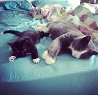 2 cats free to good home