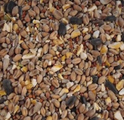 Wild bird seed with Aniseed 20kg - High energy all season garden mixed food