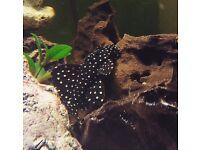 Full Tropical aquarium set up