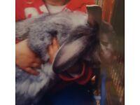 Missing From Rettendon Thumper 🐰