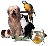 Our Furry Friends Pet-Sitting: ♥ We're There When You Can't Be♥