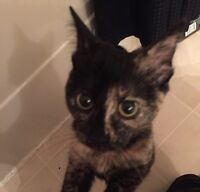 Free Kitten To a Good Home!