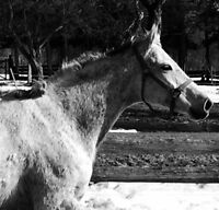 Horse for Lease/Half-Lease