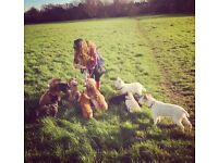 Home from home dog daycare service, dog walking and boarding *small-medium size breeds only*