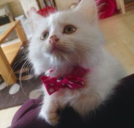 Gumtree Manchester Free Cats