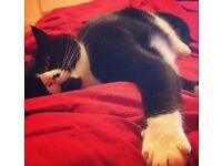 Cat / pet sitting service