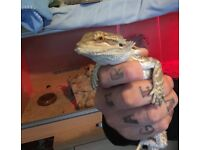 Bearded dragon &tank