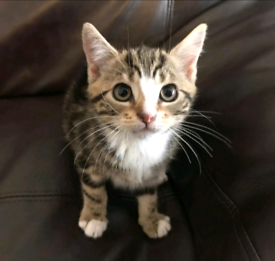 Friendly Cute Kittens for Sale