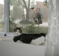 Garderie Miaou -  pour chats intérieurs seulement (Mtl)