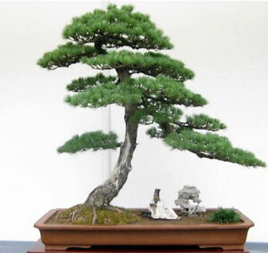 Aluminum Wire for Bonsai and other Crafts