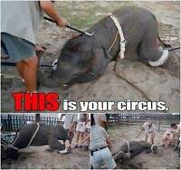 Protest Against Lethbridge Circus