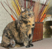 Sadie Needs a Great Home-Only Serious Cat People Need Apply