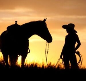Do your horses need exercise or worked on? I'm here to help