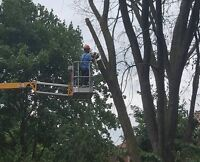 Tree removal ! Tree trimming! Call Etree today