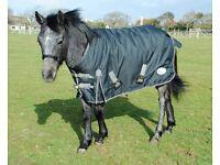 Outdoor Medium Weight Standard Neck Horse Rug