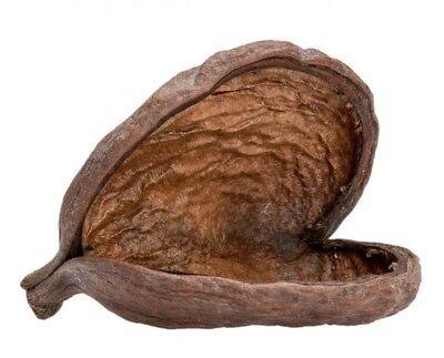 NaDeco® Badam natur ca. 8-12cm | Sterculia foetida | Badam Schote | Riesen Mande