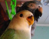SUDBURY BIRD HOUSE