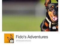 Fido's Adventures