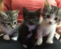 Baby Kittens, Ready to Go !!!!!