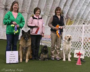 Internationally Certified Dog Trainer-classes starting Oct 12th! Sarnia Sarnia Area image 3