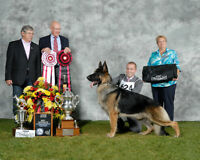 WOODSIDE GERMAN SHEPHERDS