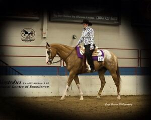 Experienced show gelding youth or non pro