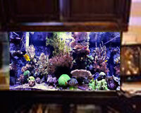 REDUCED 75 Gallon Salt Water Aquarium
