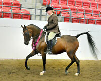 Sask. Arabian Horse show and open breed dressage show with RDDA