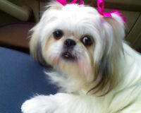 Premier Dog Grooming day,evening,weekend appointments-Save 20%*