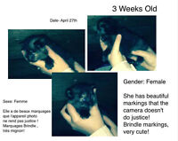 Kittens free to good homes -- chatons gratuits
