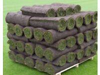 1m2 lawn turf
