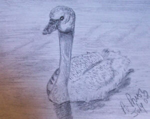 Learn how to draw Animals St. John's Newfoundland image 5
