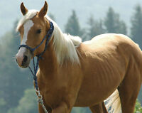 Looking for a new horse projet? We have a few to choose from