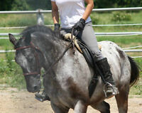 Adult riding lessons Beginner/Intermediate/Advanced