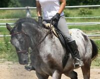Private adult riding lessons