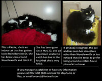 LOST: Fluffy black kitty