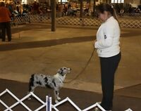 ARBA DOG SHOW - ALL Welcome - Norwood, Ontario
